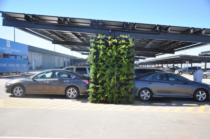 The SunPower Mexicali, Mexico, plant waters these carport plants using grey runoff water from cleaning solar panels.